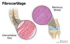 Types of cartilage by @MikaelaStiver on Twitter Beach Mat, Outdoor Blanket, Twitter
