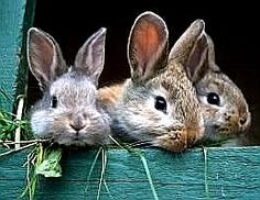 Cute Baby Bunnies, Funny Bunnies, Cute Babies, Funny Rabbit, Animals And Pets, Baby Animals, Funny Animals, Cute Animals, Rabbit Eating