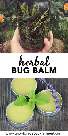 Learn how to make this DIY homemade herbal no bug balm to keep unwanted bugs away! Made with pest repelling lemon balm, you can avoid the toxic chemicals in commercial bug spray with this all natural herbal recipe. Healing Herbs, Medicinal Herbs, Natural Healing, Holistic Healing, Natural Health Remedies, Herbal Remedies, Cold Remedies, Cough Remedies For Adults, Salve Recipes