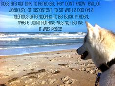 Link to paradise = dogs = peace I Love Dogs, Puppy Love, Fuzzy Wuzzy, Crazy Dog Lady, Snow Dogs, Dogs And Puppies, Doggies, Basset Hound, Animal Quotes