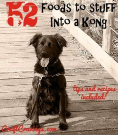 52 Things to Stuff in a Kong Toy. Tips and Recipes Too. Find recipes and ideas for what to put into your dog's Kong toy.