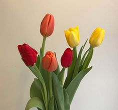 My Flower, Flower Power, Mood And Tone, Black Tulips, Plants Are Friends, Flower Aesthetic, Aesthetic Pictures, Planting Flowers, Tulips Flowers