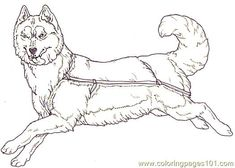 Dog Sled Coloring Page Preschool