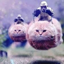 Risultati immagini per gattini su salvini