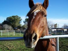 This is my wife's horse Meadow, she hasn't been feeling well lately.