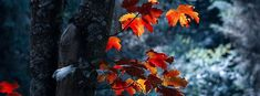 Fall Cover Photos, Fall Facebook Cover Photos, Beautiful Facebook Cover Photos, Best Facebook Cover Photos, Fall Photos, Facebook Timeline, Background Facebook Cover, Cover Wallpaper, Fall Pictures
