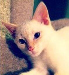 Cute lil Faye