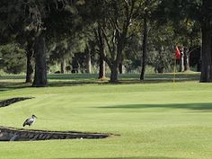 Hankey Golf Club, a Top 10 Nine hole course in South Africa
