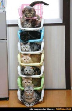 Gatos bien ordenados.