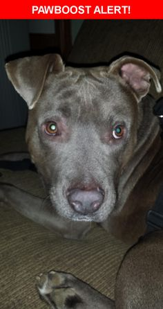 Mobile Home Park See More Please Spread The Word Zeke Was Last Seen In Raleigh NC 27603 Nearest