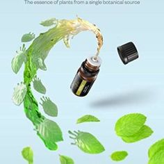 Important Oils, Anjou Aromatherapy Oil Upgraded Present Set Pure & Therapeutic Grade, Standard… Aroma Diffuser, Essential Oil Diffuser, Essential Oils, Nail Conditions, Brown Bottles, Aromatherapy Oils, Carrier Oils, Bergamot, Tea Tree