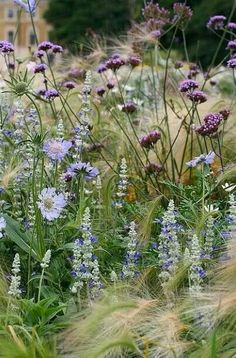 perennials and annuals at Kew Gardens - try asters, Verbena bonariensis, salvia, foxtail barley- scabieuse, sauge. Beautiful Flowers, Plants, Beautiful Gardens, Plant Combinations, Planting Flowers, Flowers, Perennials, Kew Gardens, Cottage Garden