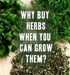Learn how to grow and preserve your own garden herbs here.