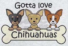 I do! <3 Raza Chihuahua, Chihuahua Puppies, Cute Puppies, Cute Dogs, Dogs And Puppies, Doggies, Chihuahua Quotes, I Love Dogs, Puppy Love