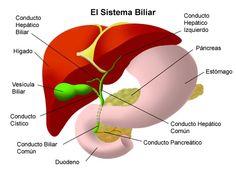 Remedios naturales para tratar las obstrucciones en las vías biliares - Blog de Farmacia infusiones de manzanilla o menta