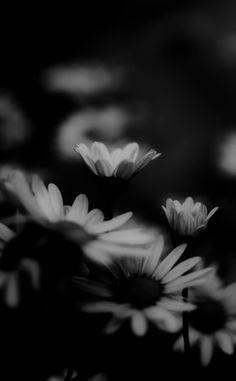 b/w flowers