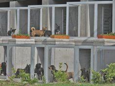 Centro de bienestar animal La Perla (medellín) www.tresarquitectos.com
