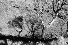 Shadows of rowan trees (mountain ash) at base of Galtee Mor mountain (photo: Sean Fagan).