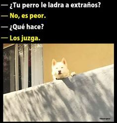 Funny Spanish Memes, Spanish Humor, Funny Animals, Cute Animals, Mexican Memes, Funny Phrases, Best Memes, Funny Images, Cool Pictures