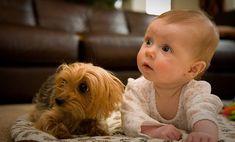 Bebek Olan Evde Hayvan Beslemek Doğrumudur? Herkesin evinde bir hayvan vardır. Bu evcil hayvanlar; köpek, kedi veya kuş olabilir.