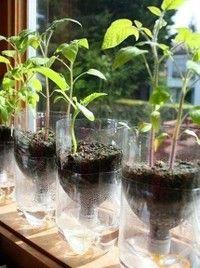 Coke bottle DIY crystal flower pots, beautiful, right?