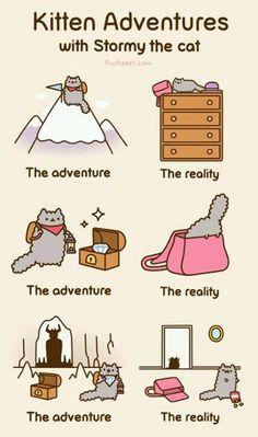 Adventures of teh kittens