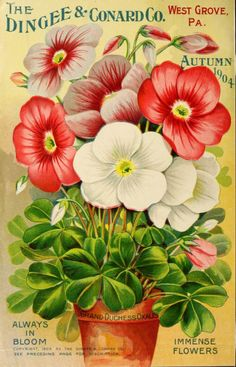 Vintage Green FLOWER SEED CATALOG PACKETS Country Garden Theme WALL Paper BORDER