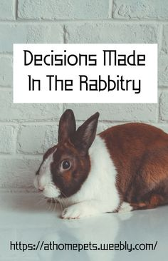 How does a rabbit breeder make decisions in their rabbitry? What are some steps you can take? House Rabbit, Decision Making, Rabbits, Goals, Pets, How To Make, Animals, Animaux, Rabbit