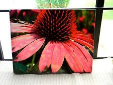 11x14 Coneflower Photograph on Canvas