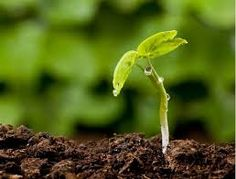 Then you bury a seed inside a little pot and you water it. In a couple days, maybe a week, the plant should have started to grow.