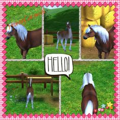 My horse in StarStableHorses Name: HoneyCaramel Breed:Hafflinger