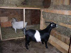 Goat barn, I like the hay trough.