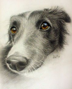 """It Is All About Conscience"" by Zile, Latvian female artist who draws portraits of people & dogs, often for charities"