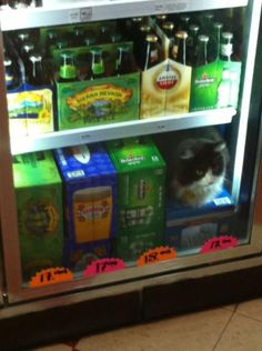 Beer Cat.  Beer AND a cat? It's a great buy!