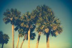Palm Trees Canvas Print, tropical beach decor, Tybee Island Georgia, retro vibe, Savannah