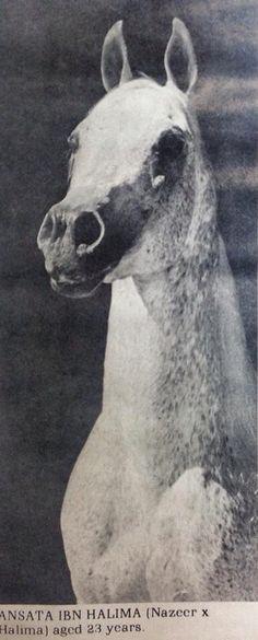 Ansata Ibn Halima
