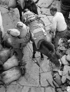 Μεταφορά τουλουμιών στα Αμπελάκια 1973 φωτ.Τάκης Τλούπας