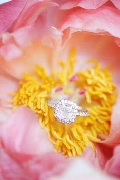 Beautiful ring shot