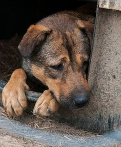 Dogs and Cats Seized from Horrendous Conditions - Help Now at The Animal Rescue Site Animal Rescue Site, Large Dogs, Animal Shelter, Rescue Dogs, I Love Dogs, Pet Supplies, Dog Lovers, Dog Cat, Cute Animals