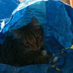 Vanlig dag min katt Ruffsan ❤️