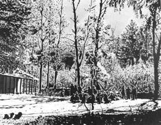 SCHOOL IN THE FOREST
