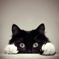 Eyes always watching