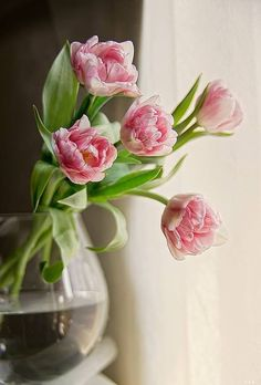 Angelique Tulips: Double petals and a soft pink hue make these lightly fragrant flowers a complete spring must-have. Once in full bloom, Angelique tulips look almost like peonies. My Flower, Fresh Flowers, Pretty In Pink, Flower Power, Beautiful Flowers, Pink Tulips, Pink Flowers, Arte Floral, Pink And Green