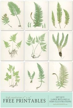 Free Fern Printables for wall art Impressions Botaniques, Free Printable Art, Free Prints, Botanical Prints, Botanical Wall Art, Diy Art, Gallery Walls, Decorating, Farmhouse Style