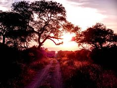 Dramatic Sunset over Kapama Private Game Reserve