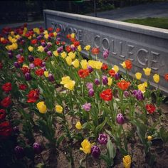 Springtime tulips sit in front of the welcome sign at Skidmore College in Saratoga Springs, NY.
