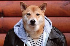 How To Live Like Menswear Dog, The Pooch Who Earns $15,000 A Month: Instagram/MenswearDog
