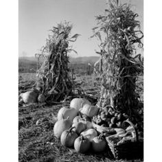 Pumpkins and corn stacks with baskets of apples Canvas Art - (24 x 36)