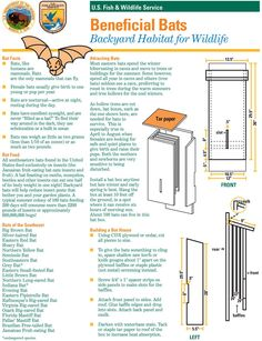 Bird House Plans 327355466665351828 - Help bats by building them a bat house that will work for your backyard, business or school. Build A Bat House, Bat House Plans, House Building, Building Bird Houses, Bat Box Plans, Outdoor Projects, Wood Projects, Bat Facts, Bird Aviary