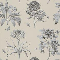 Etchings & Roses Wallpaper | Parchment Flower Wallpaper Collection | Sanderson Wallpaper